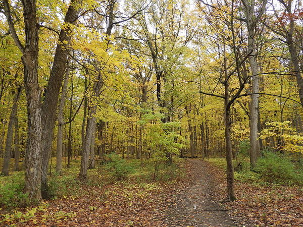 Wall Art - Photograph - Fall Woods by Red Cross