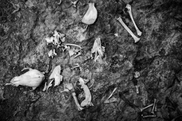 Photograph - Fallen Apart by Jeff Phillippi