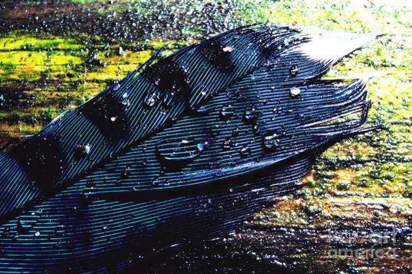 Photograph - Fallen Feather by Thomas R Fletcher