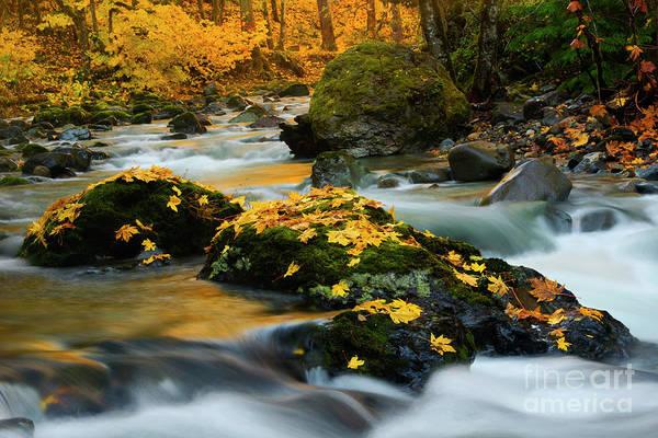 Fallen Leaves Photograph - Fallen Gold by Mike Dawson