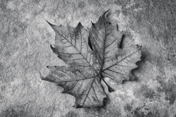 Wall Art - Photograph - Fallen Leaf Black And White by Garry Gay