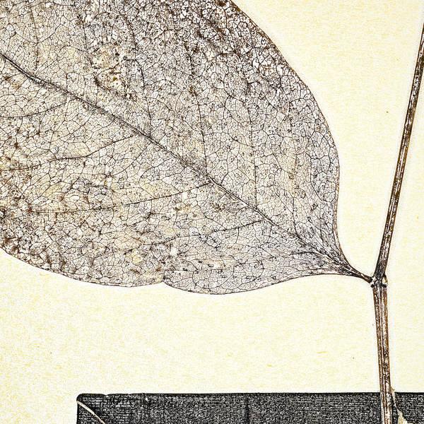 Foliage Wall Art - Photograph - Fallen Leaf One Of Two by Carol Leigh