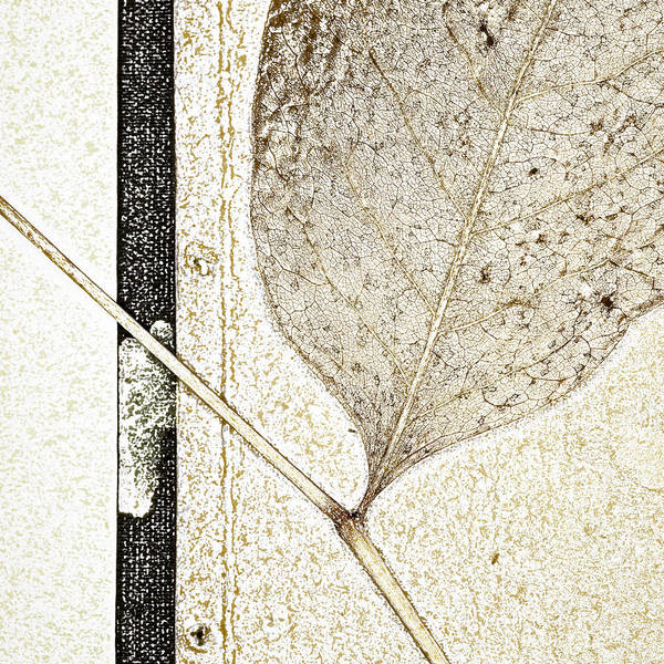 Pencil Sketch Photograph - Fallen Leaf Two Of Two by Carol Leigh