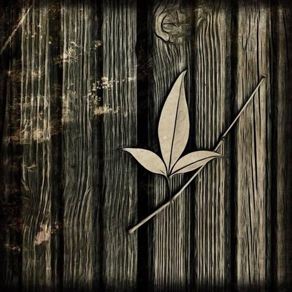 Wall Art - Photograph - Fallen Leaf by John Edwards