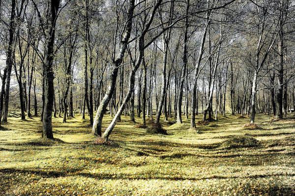 Photograph - Fallen Leaves by Edgar Laureano