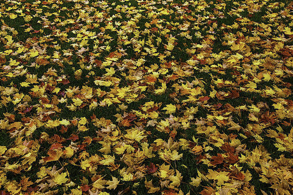 Photograph - Fallen Leaves by Garry Gay
