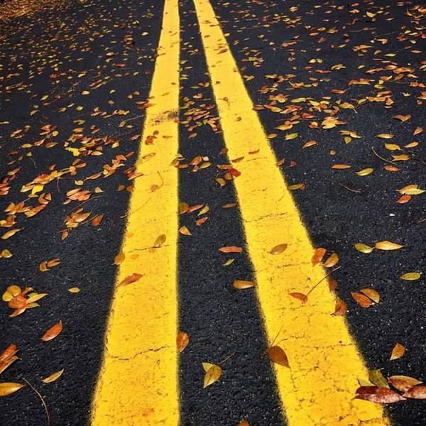 Line Wall Art - Photograph - Fallen Leaves On The Street by Juan Silva