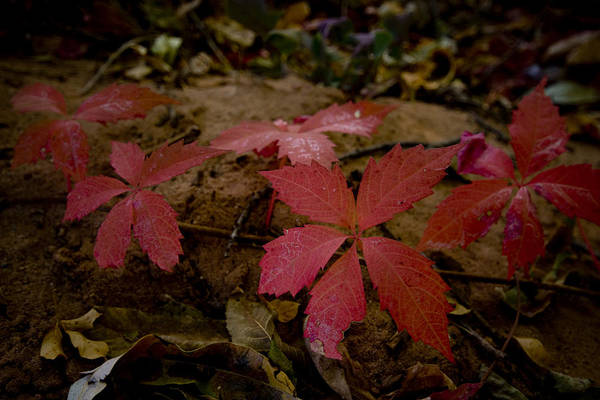 Photograph - Fallen Leaves by Richard Henne