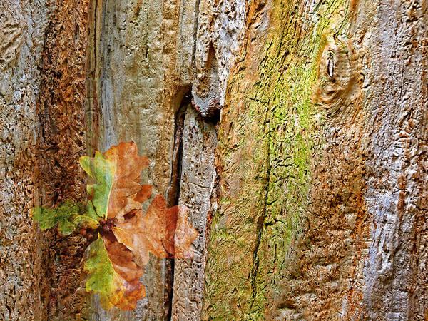 Photograph - Fallen Oak Leaves by Gill Billington