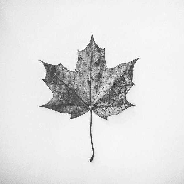 Fall Photograph - Fallen Red In Monochrome by Kate Morton