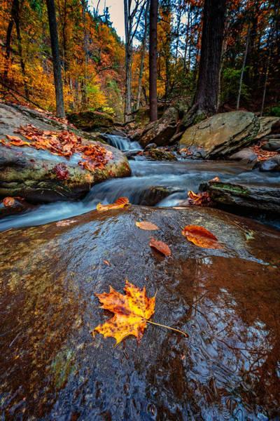 Upstate Photograph - Fallen by Rick Berk