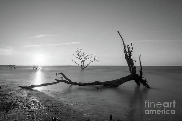 Wall Art - Photograph - Fallen Roots Sunrise Bw by Michael Ver Sprill
