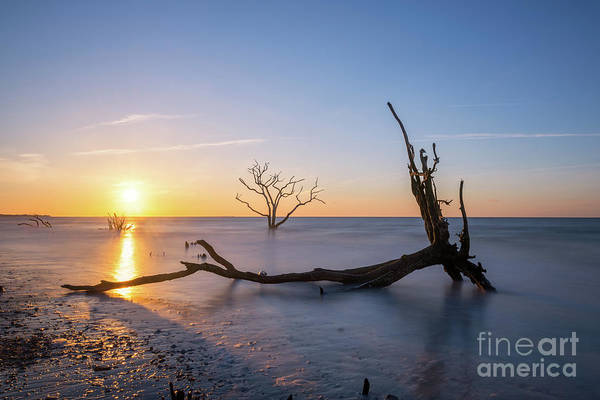 Wall Art - Photograph - Fallen Roots Sunrise  by Michael Ver Sprill