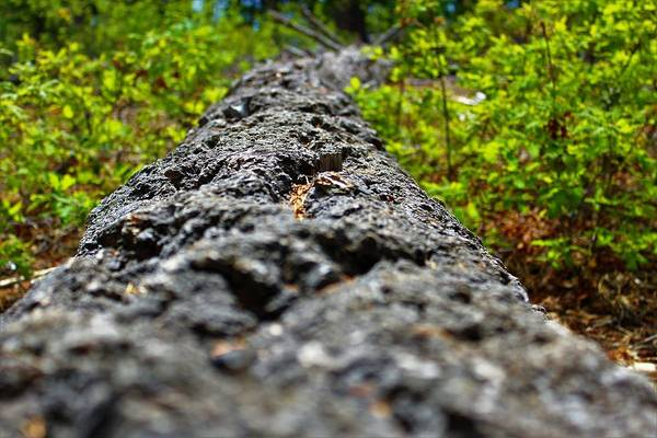 Willett Photograph - Fallen Tree by Diana Willett