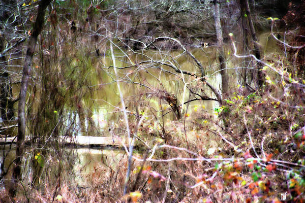 Photograph - Fallen Tree In The Bayou by Gina O'Brien