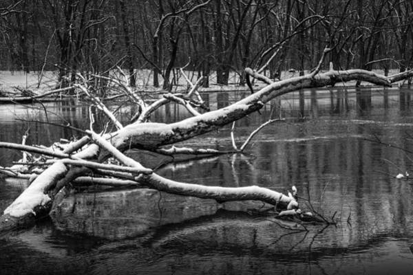 Photograph - Fallen Tree In The Grand River During Winter by Randall Nyhof