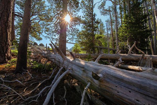 Photograph - Fallen Tree by Jonathan Hansen