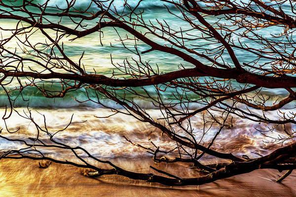 Wall Art - Photograph - Fallen Tree by Kelley King