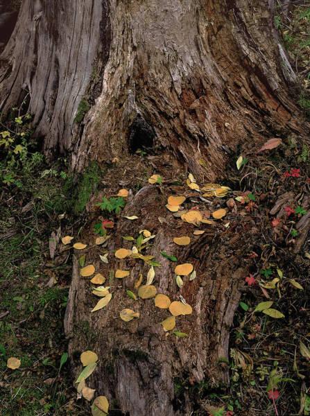 Fallen Tree Offerings Art Print