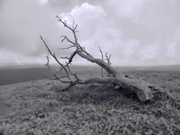 Photograph - Fallen Tree by Pamela Walton