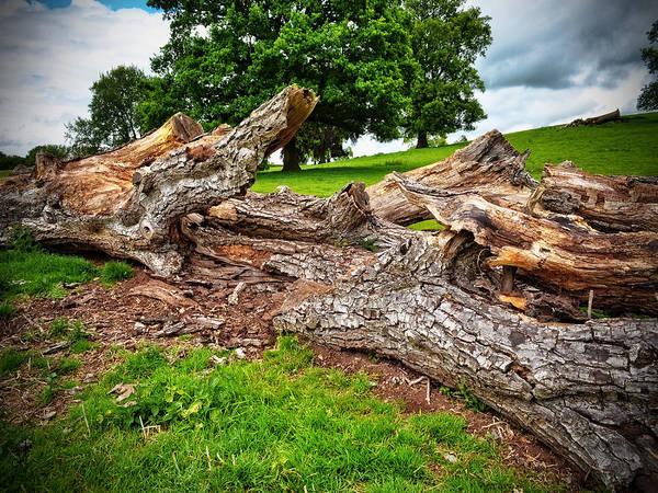 Photograph - Fallen Tree by Pennie McCracken