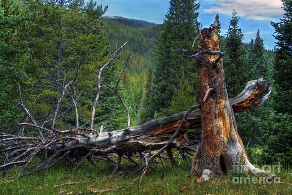 Photograph - Fallen Tree by Pete Hellmann