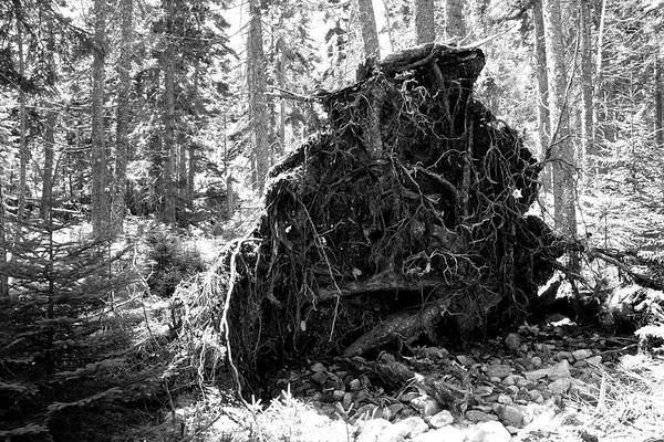 Photograph - Fallen Tree by Polly Castor