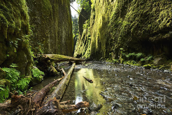 Photograph - Fallen Trees At Oneonta Gorge by Charmian Vistaunet