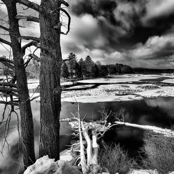 Photograph - Fallen Trees In The Moose River by David Patterson