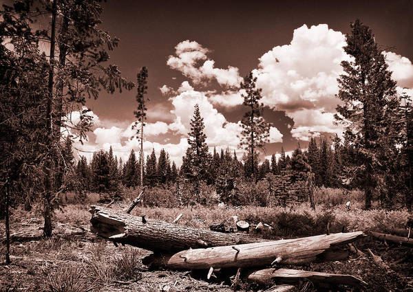 Plumas County Photograph - Fallen Trees by Mick Burkey