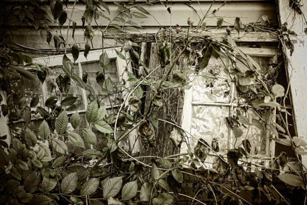 Photograph - Fallen Windows by Sharon Popek