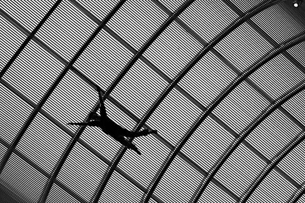 Photograph - Falling At The Art Museum by Patrick Groleau