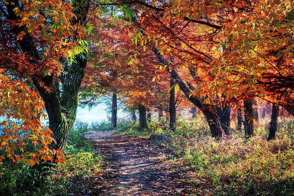Photograph - Falling For You In Autumn by Debra and Dave Vanderlaan