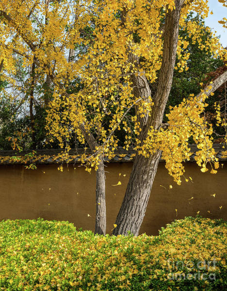 Wall Art - Photograph - Falling Gold by Jamie Pham