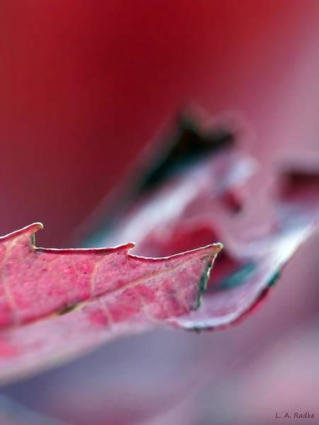 Photograph - Falling I by Lauren Radke