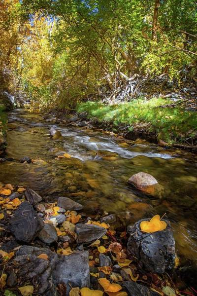 Photograph - Falling Leaves On Mcgee Creek by Lynn Bauer
