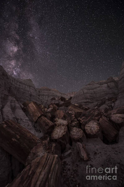 Petrified Logs Photograph - Falling by Melany Sarafis