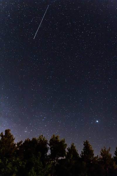 Nature Wall Art - Photograph - Falling Stars Over The Forest At The Troodos Mountains by Iordanis Pallikaras