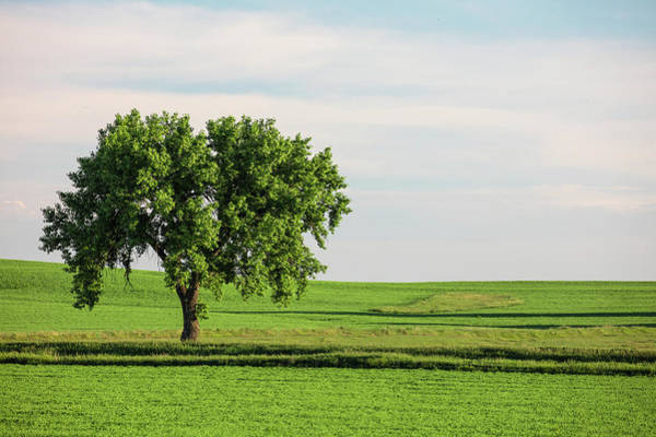 Single Leaf Wall Art - Photograph - Fallon County Tree by Todd Klassy