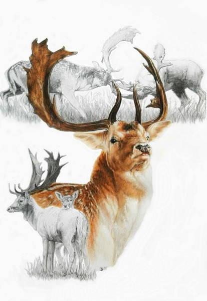 Fallow Deer Art Print