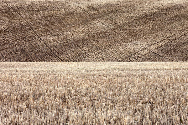 Sow Photograph - Fallow Field by Todd Klassy