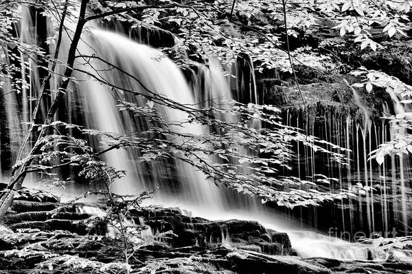 Photograph - Falls And Trees by Paul W Faust - Impressions of Light