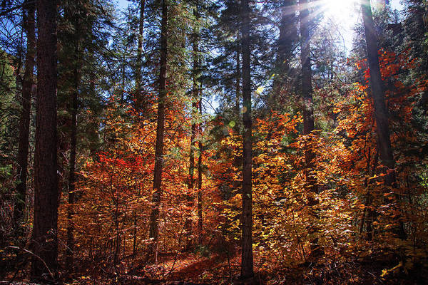 Photograph - Fall's Light On The West Fork Trail by Lynn Bauer