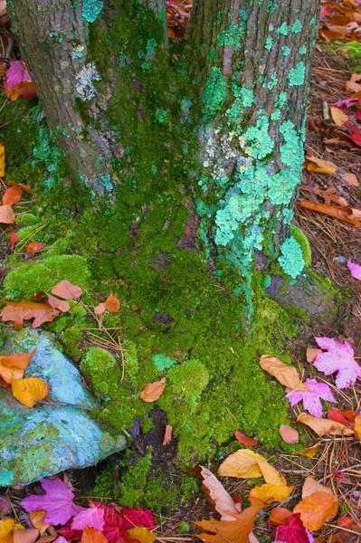Photograph - Fall's Randomnly Vibrant Hues by Polly Castor