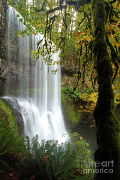 Photograph - Falls Though The Trees by Adam Jewell