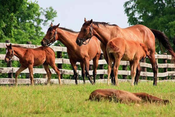 Photograph - Family Of Horses by Jill Lang