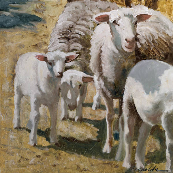 Barnyard Animal Painting - Family Of Sheep by John Reynolds