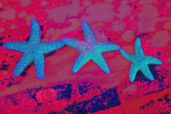 Three Seashells Photograph - Family Of Stars by Marnie Patchett