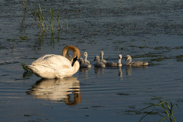 Horicon Marsh Photograph - Family Outing by Jayne Gohr