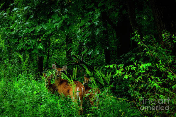 Wall Art - Photograph - Family Portrait Doe And Fawns by Thomas R Fletcher
